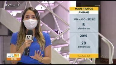 Denuncias ajudam a combater maus tratos e abandono de animais no Pará - Denuncias ajudam a combater maus tratos e abandono de animais no Pará