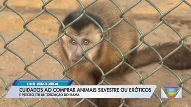 Cuidados ao comprar animais silvestres ou exóticos - É preciso ter autorização do Ibama.