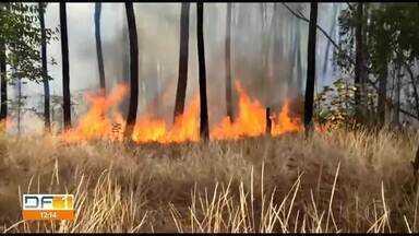Incêndio na Floresta Nacional de Brasília - Segundo o Corpo de Bombeiros, o combate às chamas durou três horas. O incêndio atingiu cerca de 39 hectares da Flona.