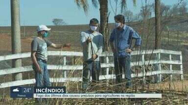 Agricultores reclamam de prejuízo causado por incêndio em São Simão, SP - Animais morreram e vegetação também ficou prejudicada com as queimadas.