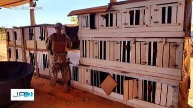 Polícia prende 20 pessoas por envolvimento em rinha de galo, em Planaltina de Goiás - COD desarticula grupo envolvido em rinha de galo depois de denúncia.