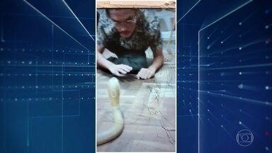 Universitário picado por naja vira réu em processo de tráfico internacional de animais - O celular de Pedro Krambeck foi apreendido pela polícia. Nele, os investigadores encontraram vários vídeos com cobras.