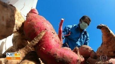 Agricultores de Pernambuco criam bancos de alimentos para ajudar quem não tem nada na mesa - Grupos de agricultores familiares de todo o Estado doam parte da produção para 21 bancos de alimentos da capital e do interior. Famílias beneficiadas são cadastradas previamente