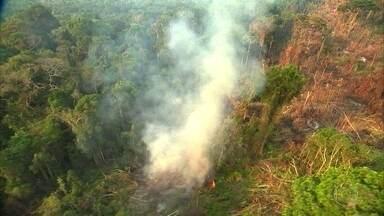 Países europeus cobram Brasil por medidas para conter o desmatamento na Amazônia - Em carta, embaixadores de oito países também alertaram que a devastação dificulta a compra de produtos do país.