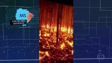 Queimadas avançam sobre parques nacionais brasileiros - No Centro-Oeste, o fogo ameaça os parques nacionais e destrói uma das maiores riquezas econômicas da região.