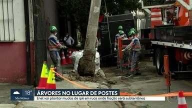Enel substitui postes por ávores na Vila Olímpia - Serão removidos 279 postes, mas em apenas 24 há viabilidade para plantio de ipê. Ação faz parte de projeto para enterrar fiação elétrica e de telecomunicações.