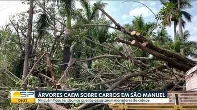 Árvores caem sobre carros em São Manuel - Ninguém ficou ferido, mas quedas assustaram os moradores da cidade.