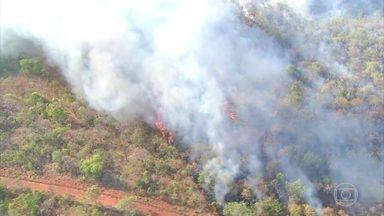 Em Tocantins, Cerrado sofre com o fogo - Ministério Público está monitorando as fazendas suspeitas de começarem queimadas ilegais para preparar o solo para plantio ou pastagem.