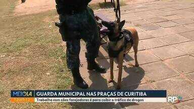 Cães farejadores ajudam no trabalho de combate ao tráfico de drogas em Curitiba - Os animais reforçam as operações feitas diariamente pela Guarda Municipal nas praças da capital