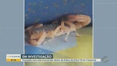 Vídeo mostra escorpião em ônibus do transporte público de Campinas; Emdec apura caso - Imagens foram gravadas na sexta-feira (25) em veículo da linha 116, segundo testemunhas. Emdec, que é responsável pelos coletivos da cidade, pediu esclarecimentos a uma empresa que também faz a manutenção dos carros.