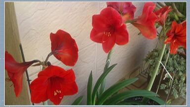 Moradores do Alto Tietê compartilham fotos de flores na primavera - Estação espalha cores pelas ruas.
