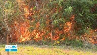 Queimada destrói cerca de 10% do Jardim Botânico, em Goiânia - Chamas se espalharam rapidamente devido ao tempo seco e bombeiros ainda trabalham para combater o fogo.
