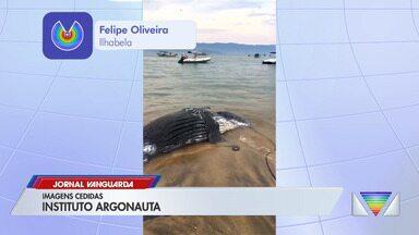 Filhote de baleia Jubarte é encontrado morto em Ilhabela - Confira reportagem do Jornal Vanguarda desta terça-feira (29).