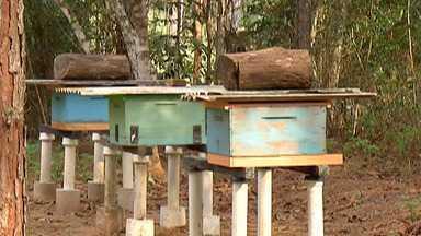 Queimadas influenciam na produção de mel - De janeiro até agora, o Alto Tietê já ultrapassou o número de queimadas de todo o ano passado. Além do tempo seco, o fogo descontrolado traz desequilíbrio para a natureza. Prova disso são os impactos na produção de mel e no trabalho de polinização das abelhas na região.