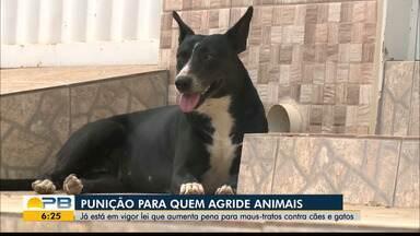 Saiba mais sobre a lei de proteção aos animais sancionada pelo Governo Federal - Alteração da lei prevê punição de dois a cinco anos de reclusão.