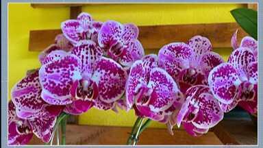 Telespectadores do Alto Tietê enviam fotos para celebrar a primavera - As telespectadoras Edna Lemes, Tânia Vargas e Rose de Oliveira compartilham fotos das flores que cultivam em casa e que ficaram ainda mais bonita nessa estação.