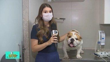 TV Bicho: especialistas dão dicas para a higiene dentária dos cães - O acúmulo de tártaro nos dentes dos animais pode causar doenças graves. Por isso, é importante a escovação e procedimentos para a retirada das placas bacterianas. Confira as informações na reportagem desta semana.