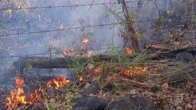 Exército pede reforço para combater as queimadas no Tocantins - Segundo dados do Inpe, o estado passou dos 9 mil focos de queimadas. Para conseguir chegar em mais áreas atingidas, o comando do Exército pediu reforço em Brasília.