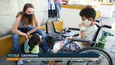 Hospital Universitário de Cascavel começa projeto de cão terapia com crianças - Primeiro visitante das crianças foi o Nicolau, de 4 anos.