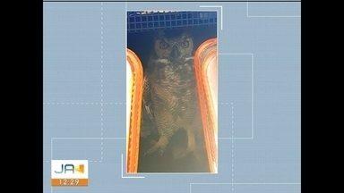 Coruja é encontrada por policiais nas margens da BR-101 em Sombrio - Coruja é encontrada por policiais nas margens da BR-101 em Sombrio
