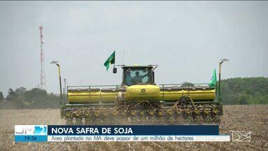 Agricultores dão início ao plantio de soja no sul do Maranhão - A previsão é que a área plantada supere a marca de 1 milhão de hectares.