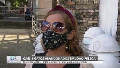 Cães e gatos abandonados em João Pessoa são cuidados pela protetora Débora Ramalho - Ela acolhe, trata e procura lares para os bichinhos.