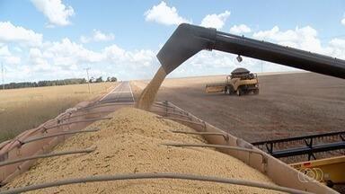 Produtores acreditam que safra da soja deve ser histórica neste ano - A expectativa é boa.