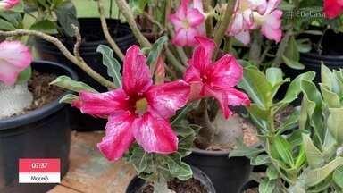 Aprenda a cultivar plantas resistentes ao sol - Juliana Alves pede ajuda para salvar planta