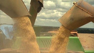 Governo zera alíquotas de importação de soja e de milho para tentar conter alta de preços - Para tentar conter a alta dos preços, o governo zerou até 15 de janeiro a alíquota de importação de soja em grãos, farelo e do óleo de soja. E isentou até o fim de março a alíquota do milho.