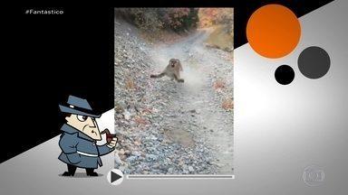 Encontro com puma: verdade ou mentira? Detetive Virtual investiga - Detetive Virtual encontrou o autor do vídeo no estado de Utah, nos Estados Unidos. Tudo foi gravado em um local chamado Slate Canyon.