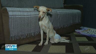 Diarista resgata cachorra deficiente que foi abandonada em Jardinópolis, SP - Animal foi deixado em rua por motorista de um carro.