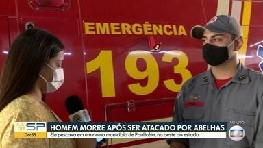 Homem morre após ser atacado por abelhas em Paulicéia - Ele pescava em um rio no município do oeste paulista. Outros pescadores ficaram feridos