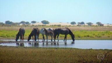 Oásis no meio do deserto: água doce é o maior do tesouro em Sechura, no Peru - O lugar é chamado de Yerba Blanca, uma paisagem totalmente diferente em meio à imensidão de areia: um lago cercado de verde, pássaros e cavalos selvagens.