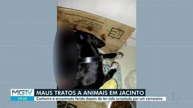 Homem é indiciado após arrastar cachorro por sete quilômetros em Jacinto - Ele amarrou o animal em uma carroça.