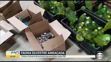 Cresce número de animais apreendidos pela PRF - Foram mais de 2.500 apreensões em Minas de janeiro a outubro.