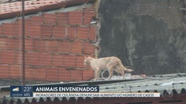 Cresce número de casos de envenenamento de animais em Ceilândia - Segundo a polícia Militar, são registrados dois chamados de maus-tratos contra animais por dia, em média, no DF.