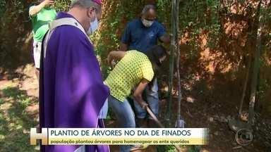 O dia de finados também foi de homenagens em vários cemitérios pelo Brasil - Em Belo Horizonte e em outras cidades, as pessoas plantaram árvores. O pedido foi feito pela Conferência Nacional dos Bispos do Brasil.