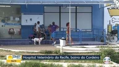 Hospital Veterinário do Recife amplia atendimento para animais silvestres - Bichos precisam estar legalizados para poderem ser atendidos.