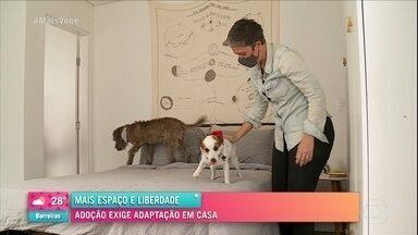 Adoção de pets exige adaptação em casa - Imóveis com animais tem regras