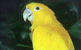 F:15 - Os animais que correm risco de extinção - O Ministério do Meio Ambiente lançou o livro vermelho com os animais que correm risco de extinção. Pela primeira vez, peixes fazem parte da lista. As aves formam o grupo mais ameaçado.