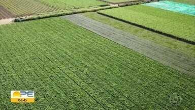 Agronegócio tem crescimento de 12,4% em Pernambuco entre janeiro e setembro de 2020 - Dados foram divulgados pela Agência Estadual de Planejamento e Pesquisas