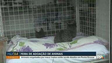 Feira de adoção reúne animais resgatados em Ponta Grossa - Eles passaram por situações de maus-tratos. Feira acontece neste sábado (19).