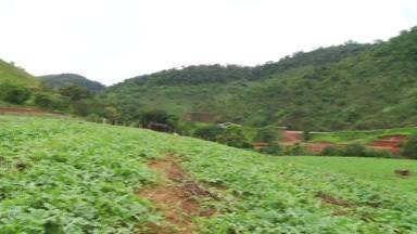 Agricultores do Leste de Minas apostam no uso de adubo orgânico líquido - Com uso de adubo orgânico, produtor consegue diminuir a aplicação de agrotóxicos.