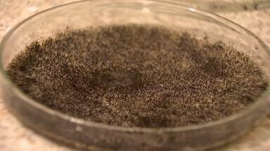 Universitários desenvolvem fertilizante a partir de um fungo - Trabalho de pesquisa começou em 2008 em Uberlândia.