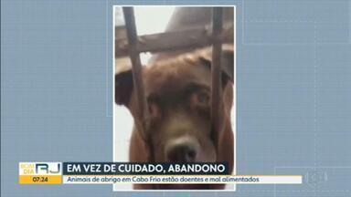 Abrigo de animais da prefeitura de Cabo Frio é investigado por maus tratos - Fiscalização encontrou cachorros com fome e doentes