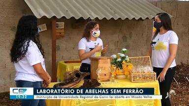 Laboratório de abelhas sem ferrão é aberto em Missão Velha - Saiba mais em g1.com.br/ce