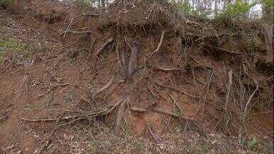 Ciência mostra como funciona a troca de substâncias entre as árvores - Assim como nas sociedades humanas, entre as árvores há muita competição para se conquistar um lugar ao sol. Mas, debaixo do solo, o que acontece é muita colaboração.