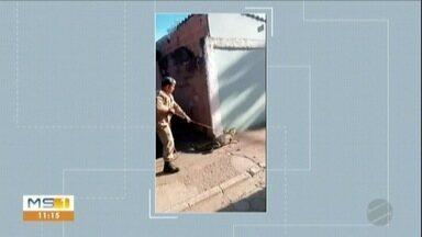 Jacaré é encontrado debaixo de carro em Corumbá - Susto logo de manhã