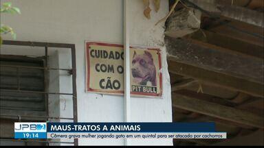 Câmara de segurança flagra mulher jogando gato em casa com cachorro - Animal foi atacado e morreu.