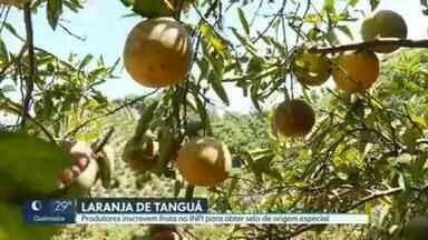 Produtores agrícolas pedem indicação geográfica para laranja de Tanguá, RJ - Produtores agrícolas pedem indicação geográfica para laranja de Tanguá, RJ